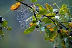 Das spiderweb Stockbild