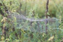 Das Spinne ` s Netz Lizenzfreies Stockfoto