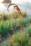 Das Spinne ` s Netz Stockbild
