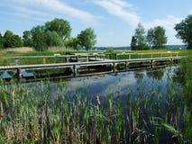 Das Sumpf-und See-Teil des Seeburgpark-Parks in Kreuzlingen lizenzfreie stockbilder