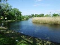 Das Sumpf-und See-Teil des Seeburgpark-Parks in Kreuzlingen stockfotos
