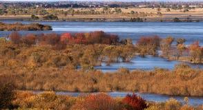 Das Sumpfgebiet lizenzfreies stockbild