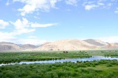 Das Sumpfgebiet in der Hochebene von Tibet Lizenzfreie Stockbilder
