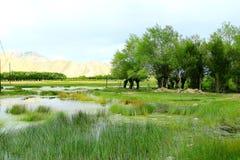 Das swampland von Tibet Stockfoto
