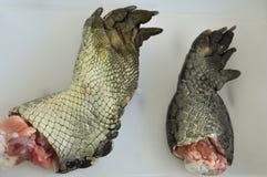Das Teil von croccodile stockfoto