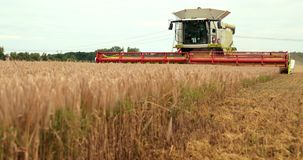 Das Thema ist Landwirtschaft Ein moderner Mähdrescher in The Field führt das Korn durch, das auf Sunny Day Against A erntet stock footage