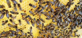 Das Themabienenhaus Lizenzfreie Stockbilder