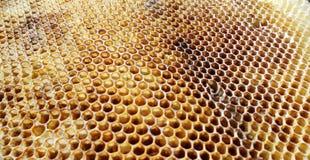 Das Themabienenhaus Lizenzfreie Stockfotografie
