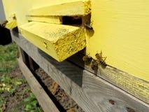 Das Themabienenhaus Lizenzfreies Stockbild