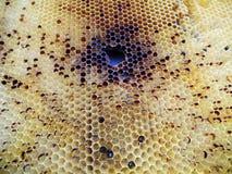 Das Themabienenhaus Lizenzfreie Stockfotos