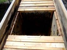Das Themabienenhaus Stockfoto