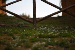Das Tor auf der Straße von Blumen Stockfoto
