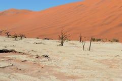 Das tote Vlei, Namibia Stockbilder