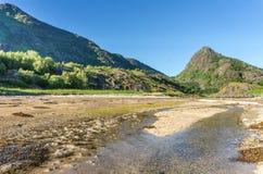 Das transparente Wasser der Bucht, der Steine und des grünen Grases, Lofoten, Norwegen Stockfoto