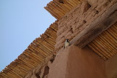 Das Trieb in Ouarzazate, Lizenzfreie Stockfotos