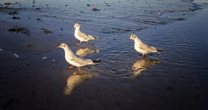 Three seagulls on the beach of the North Sea stock photo
