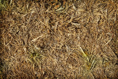 Das trockene Gras Stockbild
