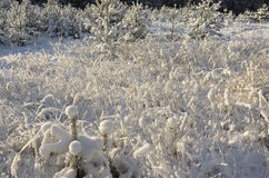 Das trockene Gras geholt durch Schnee stockbilder