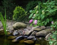 Das Ufer des Teichs mit großen Steinen, mit blühender rosa Hortensie Im Hintergrund des Gartenteichs wachsen Sie Evergreens lizenzfreies stockfoto