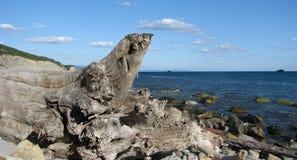 Das Ufer des zarten Meeres, der alte Baumstumpf liegt nahe dem Wasser Stockfoto