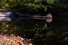 Das Ufer von einem Spiegel ähnlichen Fluss Stockfotografie