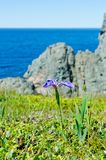 Das Ufer von Neufundland lizenzfreie stockfotografie