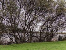 Das Ufer von See Doniños stockfotos
