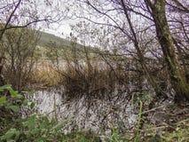 Das Ufer von See Doniños stockfoto