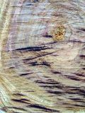 Das Universum ist in einer Scheibe des Holzes lizenzfreies stockbild