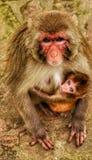 Das unschuldige Baby und ihre Mutter Stockfotografie