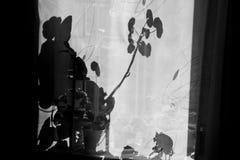 Das ursprüngliche Spiel des Lichtes und des Schattens Lizenzfreie Stockfotografie