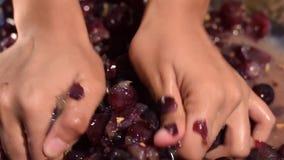 Das uvas dos frutos vinho em casa que processa o esmagamento completo do fruto com muitas mãos fêmeas novas vídeos de arquivo