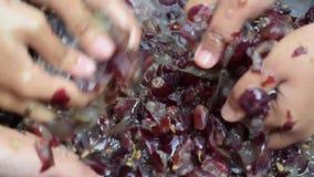Das uvas dos frutos vinho em casa que processa o esmagamento completo do fruto com muitas mãos fêmeas novas video estoque