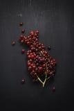 Das uvas vida roxa ainda no fundo preto Fotografia de Stock
