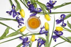 Das Veilchen Irises xiphium Knolleniris, Iris sibirica mit gelber Tulpe auf weißem Hintergrund mit Raum für Text Draufsicht, flac Lizenzfreie Stockfotos