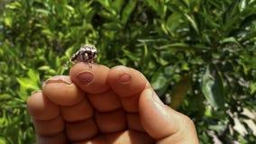 Das Verhältnis zwischen dem Menschen und Insekt schön lizenzfreie stockfotografie