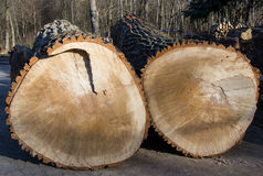 Der verringerte Baum Lizenzfreie Stockbilder