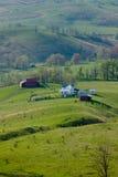 Das Vieh, das auf einem Berg weiden lässt, bewirtschaftet in Virginia Lizenzfreie Stockbilder
