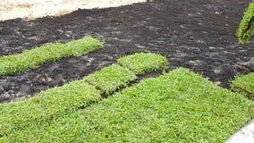 Das Vorbereiten verzieren Gras mit Düngemittel auf dem Feld Lizenzfreie Stockfotos