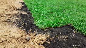 Das Vorbereiten verzieren Gras mit Düngemittel auf dem Feld Stockfoto