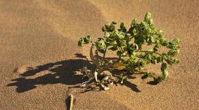 Das Wüstenleben Lizenzfreies Stockbild