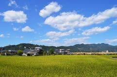 Das Wachstum der Reispflanze Stockfoto