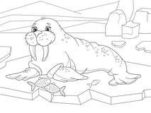 Das Walroß flippered Meeressäugetier mit einer unterbrochenen Verteilung über den Nordpol in der Arktis Bunte grafische Abbildung Lizenzfreies Stockfoto