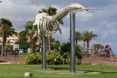 Das Walskelett in Morro Jable- Fuerteventura, Kanarische Inseln Stockfoto