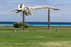 Das Walskelett in Morro Jable- Fuerteventura, Kanarische Inseln Stockbilder