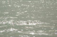 Das Wasser Stockfotografie