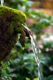 Das Wasser, das vom Felsen mit grünen Farnen herum fließt Lizenzfreie Stockbilder