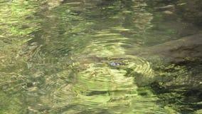 Das Wasser, das durch Flussschlagfelsen laufen gelassen wird, macht geplätschert im forset stock video footage