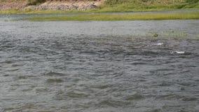 Das Wasserfließen machen Welle und plätscherten auf Fluss stock video footage