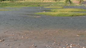 Das Wasserfließen machen Welle und plätscherten auf Fluss stock video